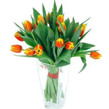 prosty bukiet tulipanów racibórz