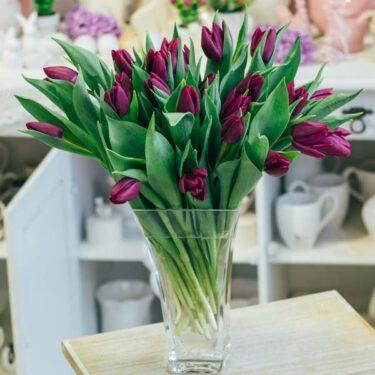 bukiet tulipanów fioletowy